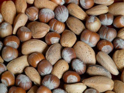 nuts-11265_960_720